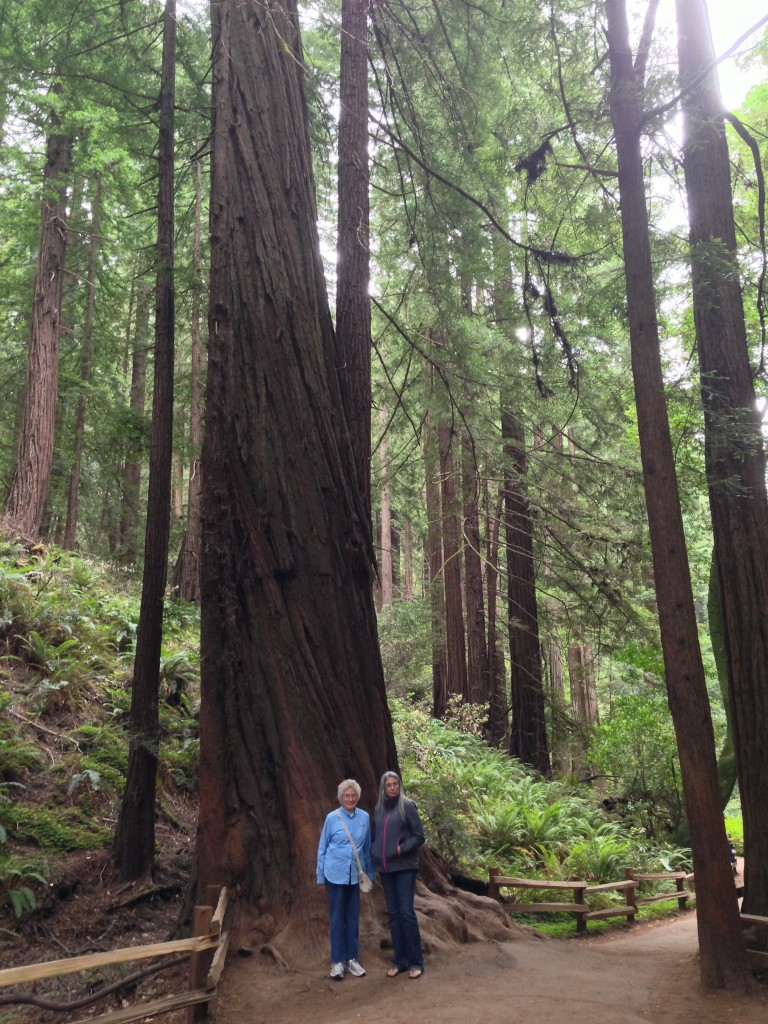 Hiking in Muir Woods